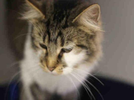 Catwoman ID No. A151451
