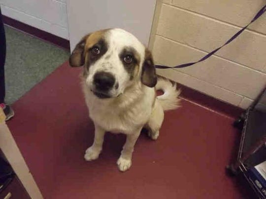 Beethoven ID A152499