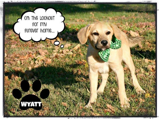 Wyatt is a hound/Mt. Curr mix that's cute, cuddly & fun. He's away for training at KSP right now but will return soon, ready to go to his forever home. To submit and application for Wyatt, please contact the Mary Hall Ruddiman Shelter.