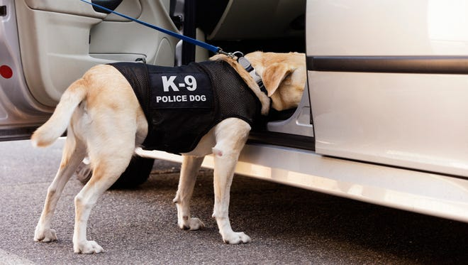After recreational marijuana becomes legal Jan. 1 in Nevada, police drug dogs will still alert when they sniff its presence.