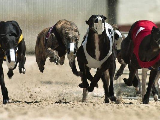 Greyhounds FILE 03.jpg