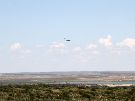 Turkey vultures are a familiar sight on the horizon in southeastern New Mexico.