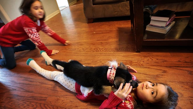 Members of the Payne family play with their new German shepherd puppy, Jolly.