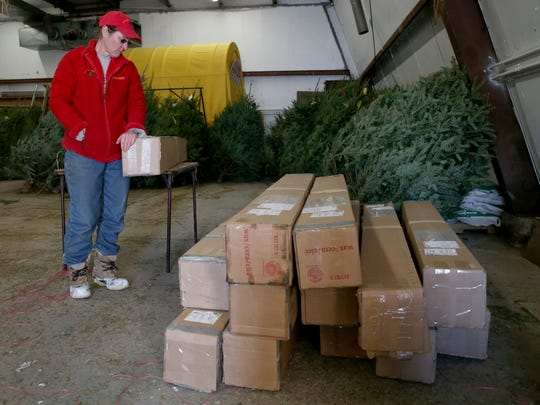 Suzanne Stokoe looks over sixteen Christmas trees for