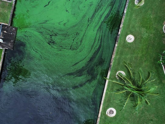 Aerial view of toxic algae bloom flowing in a canal Friday, July 14, 2018, in Cape Coral, Florida.