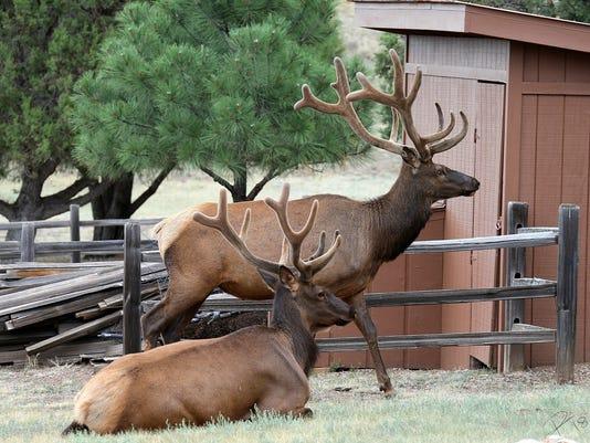 two grand elk
