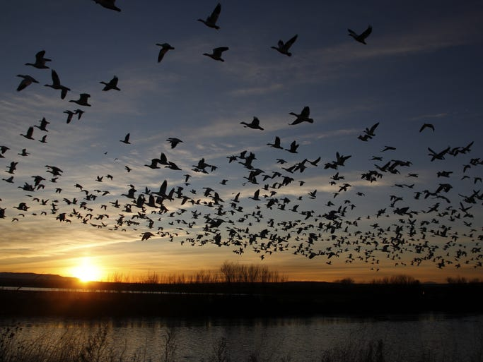 The Bosque del Apache National Wildlife Refuge in New Mexico covers 57,331-acres along the Rio Grande.