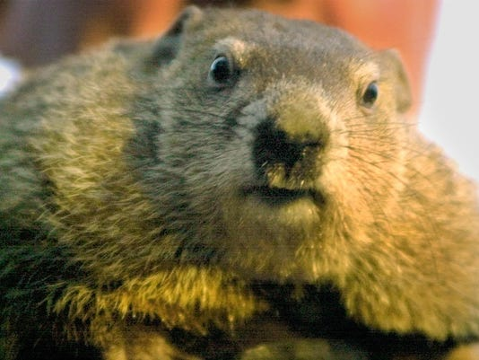 DEELEY PUNXSUTAWNEY PHIL