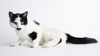 Diego is a 3-year-old cat looking for a new home.