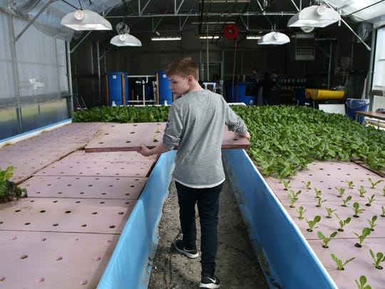 Shen Stamski looks for an open spot for lettuce sprouts. Webster High School is using their greenhouse to grown veggies  for school lunches.  Students in agriculture classes and chemistry classes are working together to care for the plants in the The aquaponics/hydroponics greenhouse.