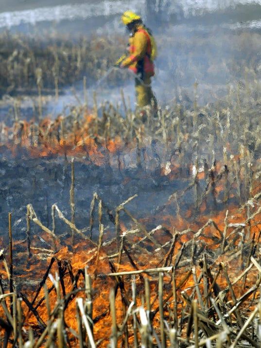 grassfirefile.jpg