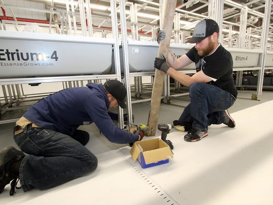 Brothers Jon, left, and Mitch Webber, of Shelton, work to install aeroponic beds inside the Black Diamond marijuan growing facility in downtown Shelton.  Both of them will work at the facility when it is up and running hopefully by July.