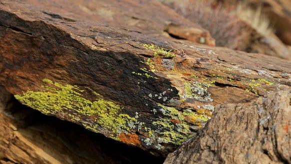 Lichens add color to rock along the Precipice Trail