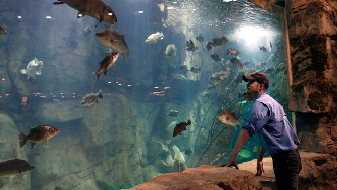 In this April 27, 2015 photo, Raulin Forst looks over an aquarium in the new Bass Pro Shop store in Memphis, Tenn. Forst oversees the live exhibits in the store, which include 1,800 fish. (AP Photo/Karen Pulfer Focht)