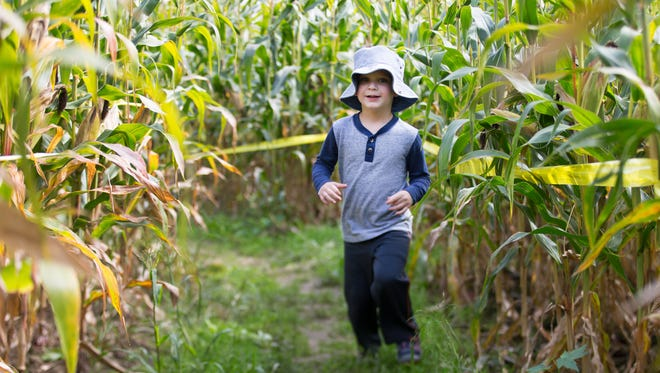 Ben Combs, 3, of Palmyra runs through the corn maze at Wickham Farms in Penfield on Friday, Sept. 25, 2015.