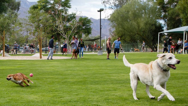Dogs play in the newly renovated Palm Springs Dog Park on Sunday, November 20, 2016.