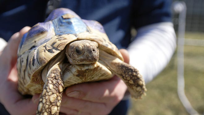 Joe Blashill, from Tigerbunny Acres Farm of Jeddo, holds a tortoise during last year?s Earth Fair at Goodells County Park. Joe Blashill, with Tigerbunny Acres Farm, of Jeddo, holds a tortoise during Earth Fair at Goodells County Park.  ANDREW JOWETT/TIMES HERALD.