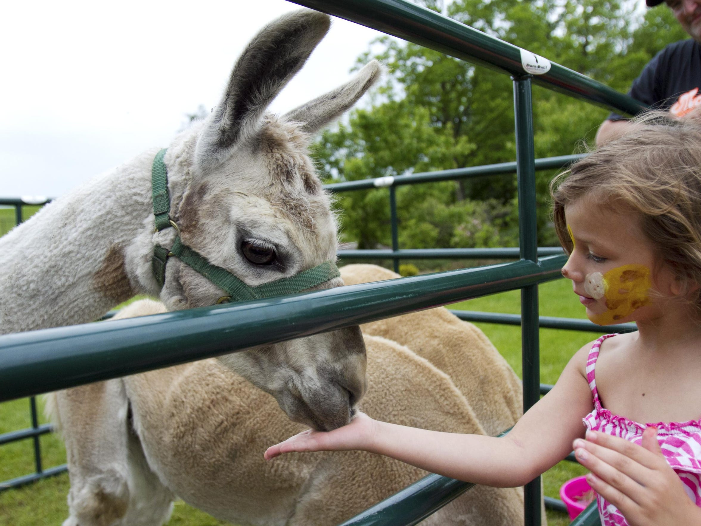 Zoofest offers a variety of family activities including a petting zoo, bounce house, hay rides, clowns, games, concessions and more.