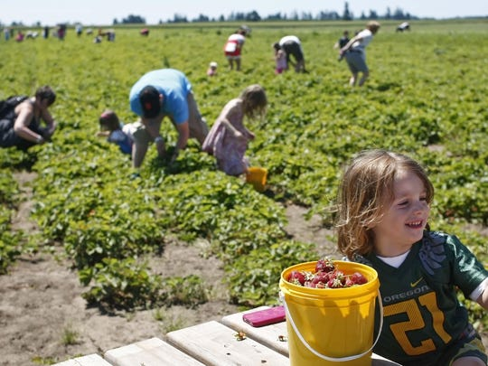 Children and families pick berries at French Prairie Gardens & Family Farm.