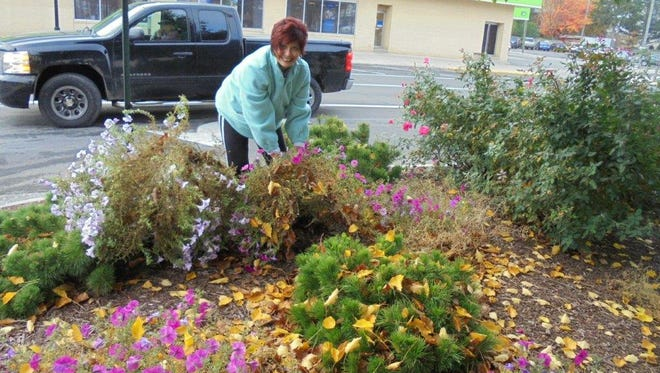 Project coordinator, for the plantings on the square, Shirley Chapman, pulls gobs of petunias from the ground on the west side of the Bucyrus square Friday, Nov. 4.