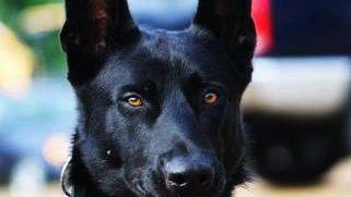 Lucas, a Hancock County K9 officer, is being recognized for his heroism by PETA