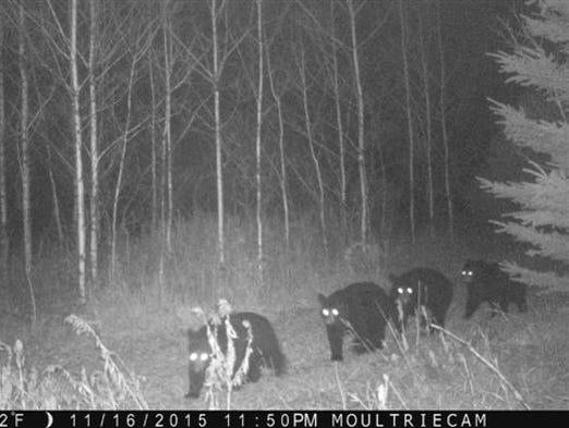 Trail Camera Photos Across Wisconsin