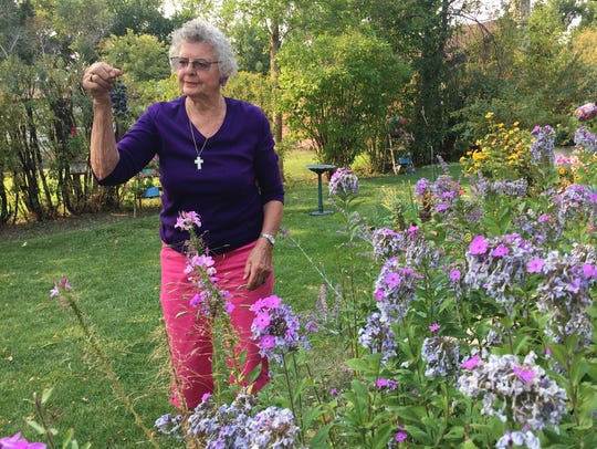 Barbara McFarlane holds up grapes she grew in her Great