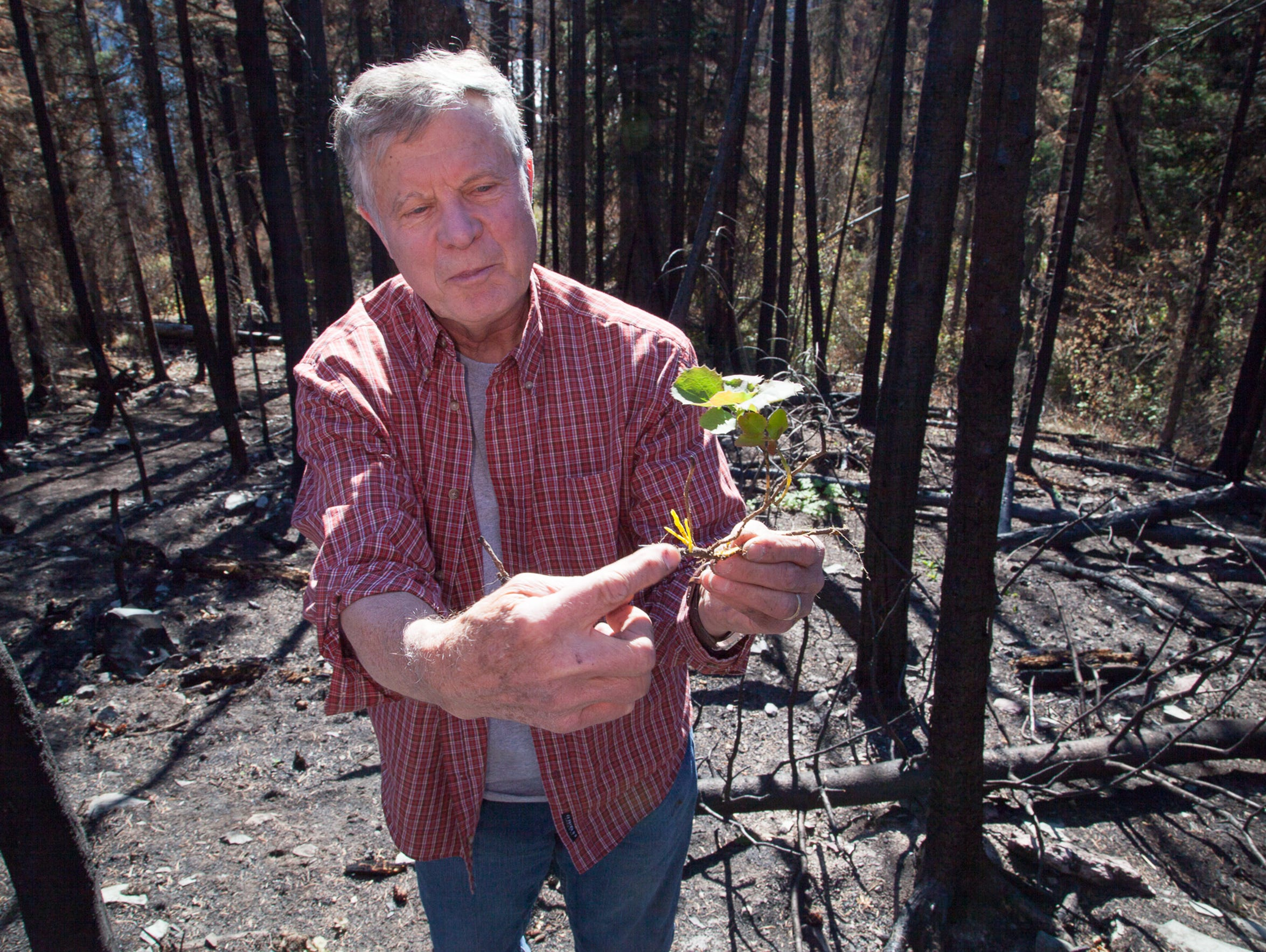 Wayne Phillips points out sprouting new vegetation