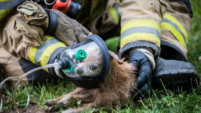 Firefighters resuscitate three dogs on the lawn of a home at 1912 W. 17th St. in Muncie after rescuing the animals from a house fire at the residence.  Twelve dogs, five cats and pig were rescued from the home.