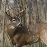 Kentucky's whitetail deer herd is in 'great shape,' according to the latest numbers.