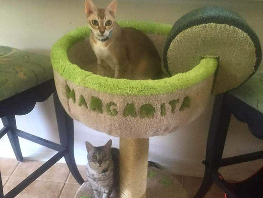 Unusual Cat Condos