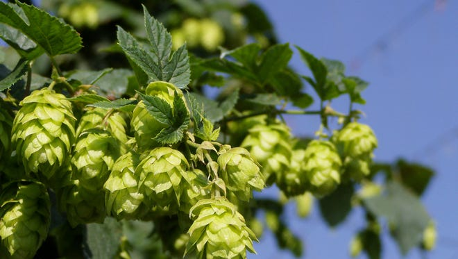 """Hoppiness"" can equal happiness for craft beer drinkers."