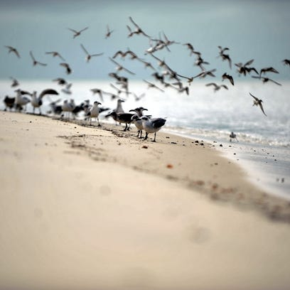Birds on the shore of Delaware Bay in Fortescue, Sunday,