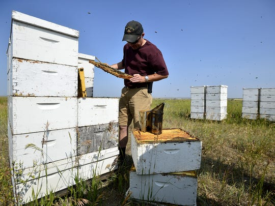 Mark Jensen of Smoot Honey Company in Power looks for the queen bee in one of his hives.