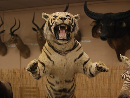 The Shell Factory in North Fort Myers sports a taxidermy collection of nearly 400 animals. The Shell Factory claims it is the largest collection on display in the country.
