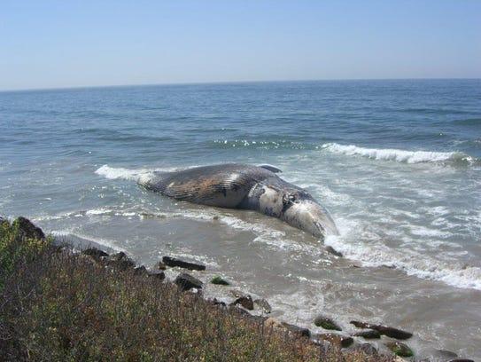 whale-earwax