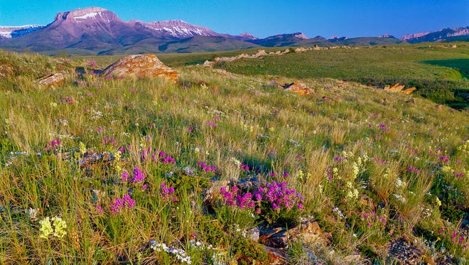 One of the field trips during the Wings Across the Big Sky bird festival will be to the Ear Mountain area on the Rocky Mountain Front.