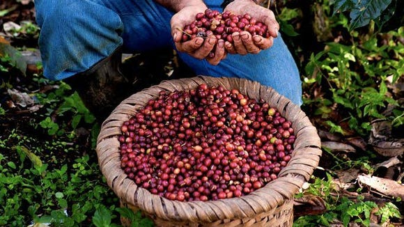 Finca Rosa Blanca Coffee Plantation Resort