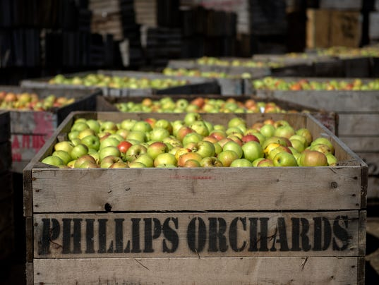 636422106656813052-170928-phillips-orchards-36a.JPG