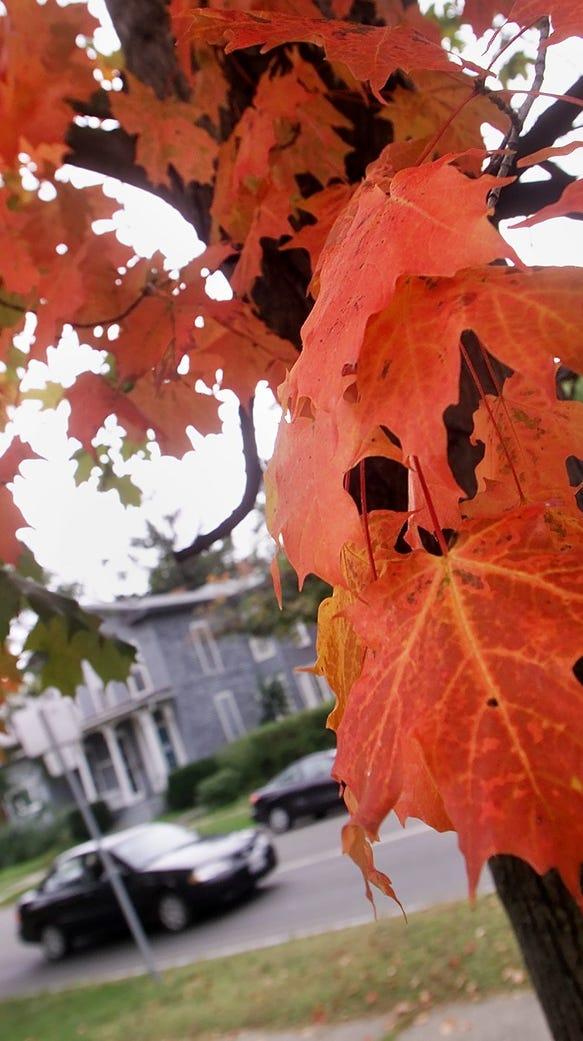 The autumn mystique beckons.