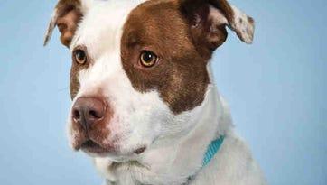 Larimer Humane Society's adoptable animals for week of Feb. 18