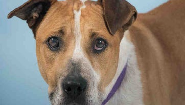Larimer Humane Society's adoptable animals for week of April 1