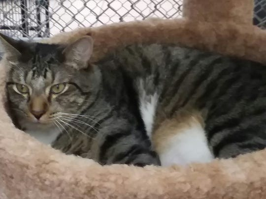 Napoleon is available at Sun Cities 4 Paws Rescue, 10807 N. 96th Avenue, Peoria. He must be adopted with his best friend Buffalo. For more information, call 623-773-2246 after 10 a.m.