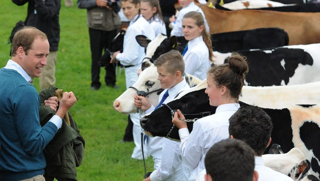 The file picture dated 14 August 2013 shows British Prince William, Duke of Cambridge, (L) joking with children inside the cattle judging ring while visiting the Anglesey Agriculture Show, Anglesey Island, Britain. According to media reports on Dec. 30, 2013, Prince William plans to enroll at the Cambridge University to study agricultural management for 10 weeks.