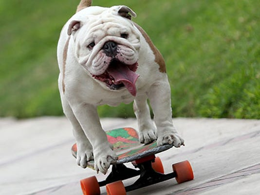 635830096409406229-longest-human-tunnel-travelled-through-by-a-skateboarding-dog-header-tcm25-405507