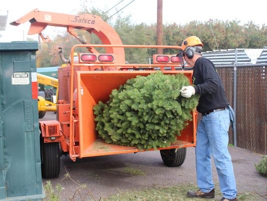 636492050666011506-Christmas-tree-mulching.jpg