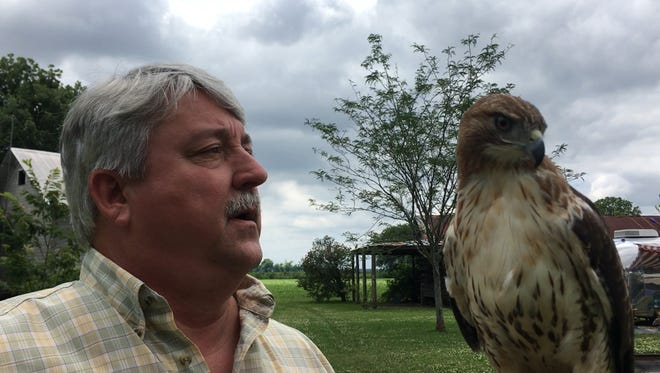 Dale Berry and his Red Tail Hawk enjoy hunting together.