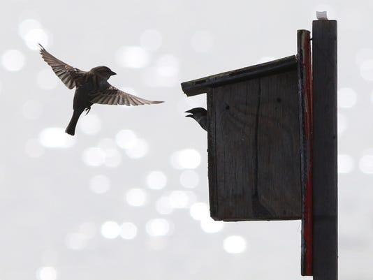 636336381162437182-birds.JPG