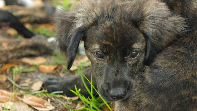 The Central Brevard Humane Society is hosting an Adopt-a-Thon for the Labor Day weekend.