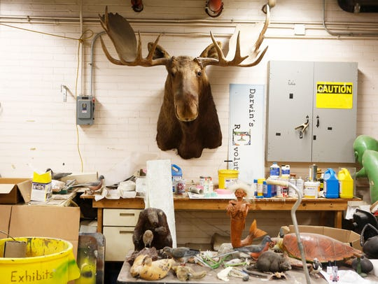 A preserved moose hangs on the wall of Dave Might's